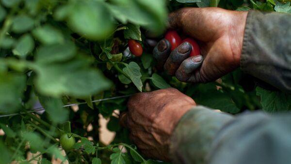 Migrant Worker, Fort Blackmore, VA - Sputnik Mundo