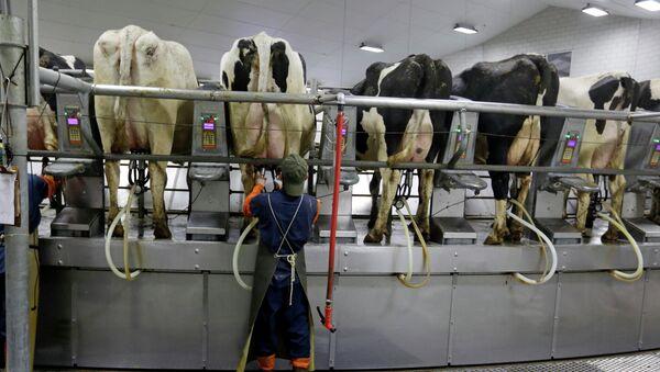 La UE pone fin a las cuotas de producción de leche - Sputnik Mundo