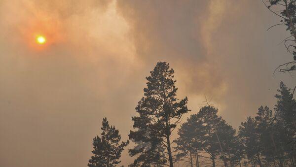 Incendios forestales en Siberia - Sputnik Mundo