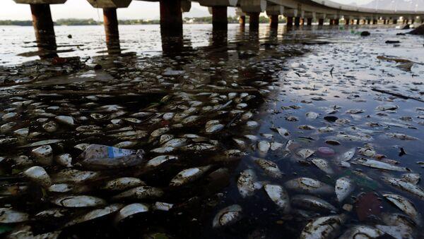 Retiran 53 toneladas de peces muertos de la laguna donde se competirá en Río 2016 - Sputnik Mundo