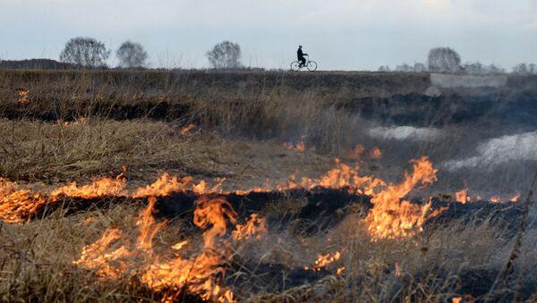 Incendios en Siberia - Sputnik Mundo