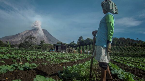 In this photograph taken on June 3, 2015, an Indonesian farmer in Karo district looks at Mount Sinabung volcano spewing smoke and ash. - Sputnik Mundo