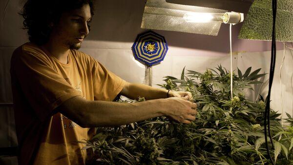 Juan Andres Palese, un cultivador de marihuana de Montevideo - Sputnik Mundo