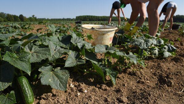 Los agricultores franceses - Sputnik Mundo