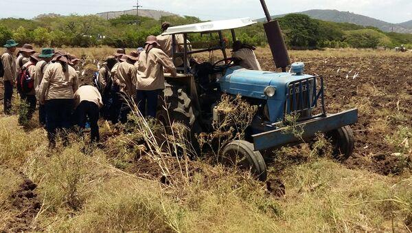 Un grupo de jóvenes reinsertados de las FARC, el ELN y las AUC participan en su capacitación como técnicos en fruticultura en una hacienda del Valle del Cauca, en el suroeste de Colombia, en el marco de un plan de reinserción que apoya el Gobierno, la empresa privada del país y organismos internacionales en el camino hacia la paz. - Sputnik Mundo