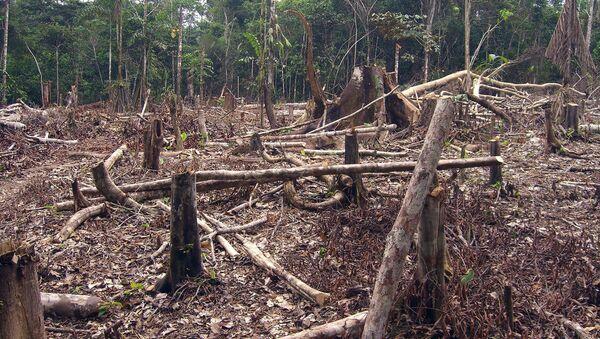 Deforestación en Colombia - Sputnik Mundo