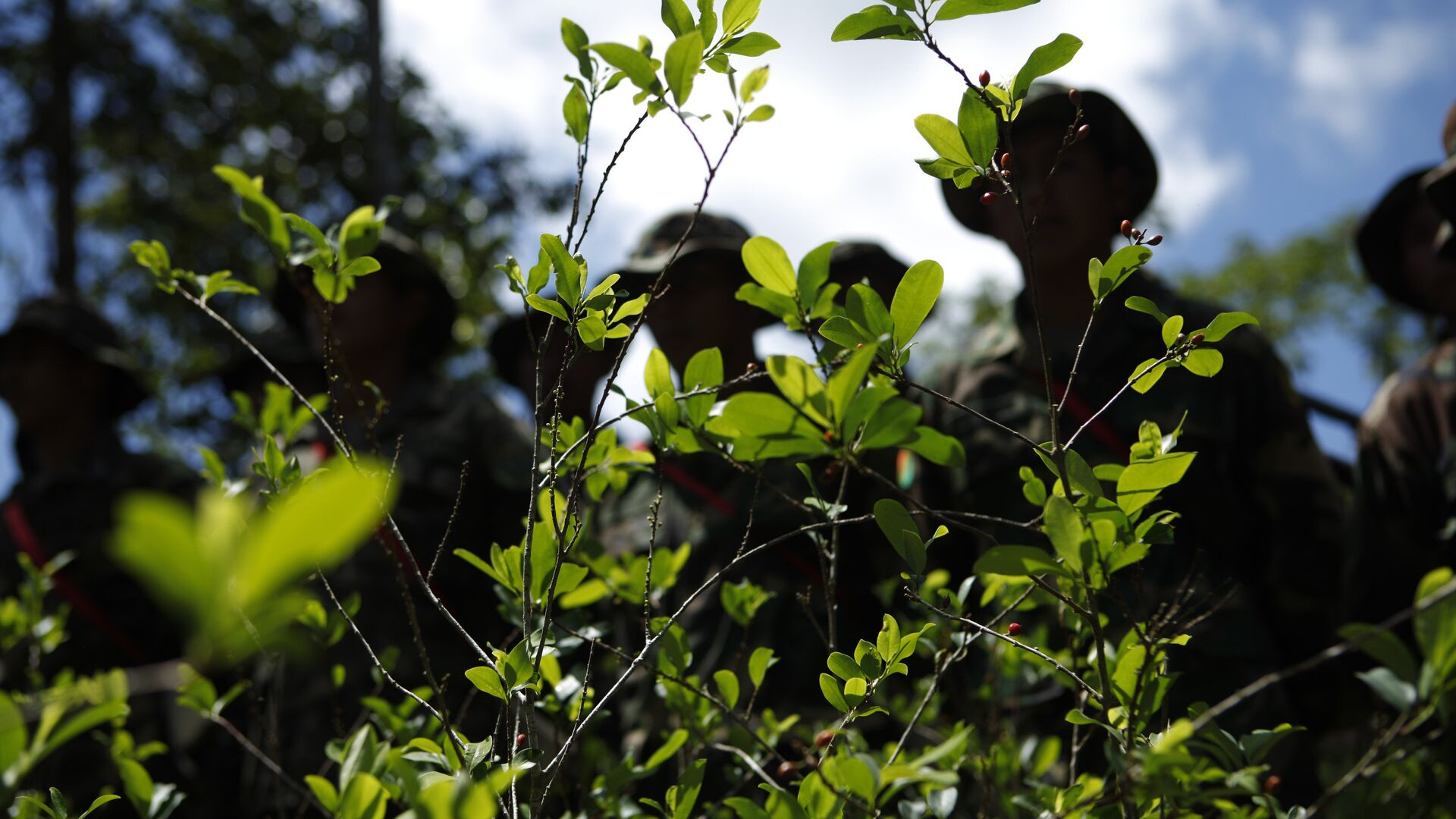 Soldiers stand next to illegally grown coca plants before uprooting them in Paraiso, Bolivia, Monday, Jan. 16, 2012. - Sputnik Mundo, 1920, 22.09.2021