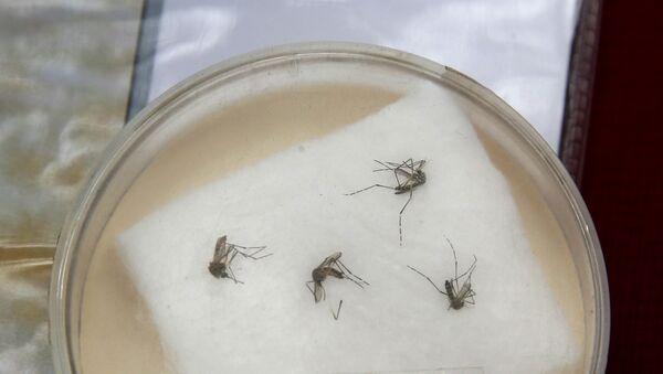 Aedes Aegypti, portador del virus de zika - Sputnik Mundo