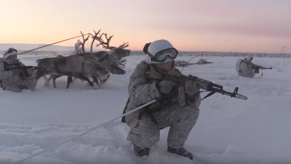 Huskies y ciervos al servicio militar - Sputnik Mundo