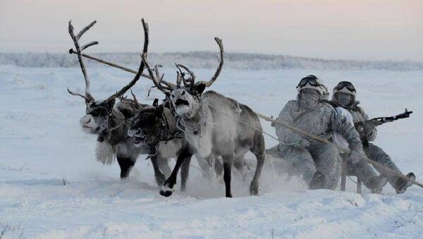 Huskies y ciervos al servicio militar ruso - Sputnik Mundo