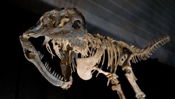Esqueleto de un dinosaurio - Sputnik Mundo
