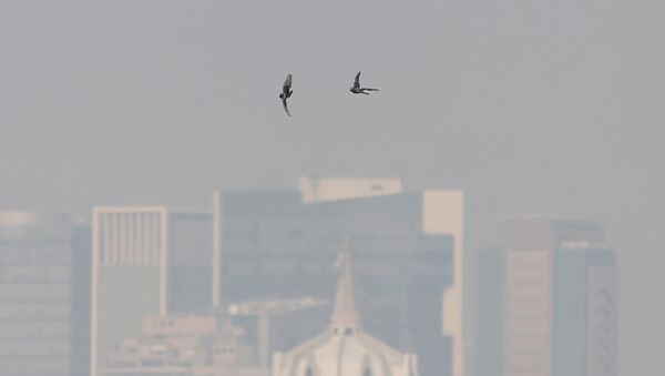 La emergencia ambiental en México - Sputnik Mundo