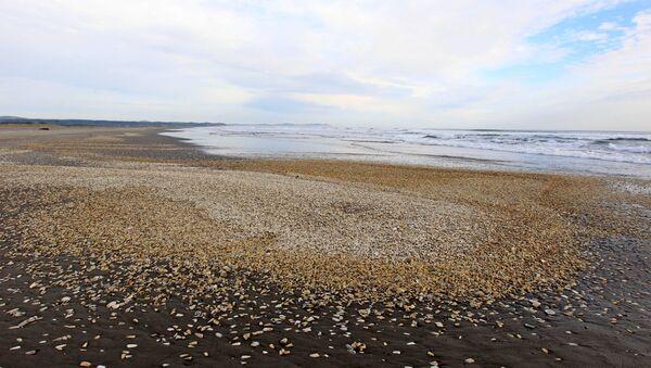 Marea roja en Chile - Sputnik Mundo