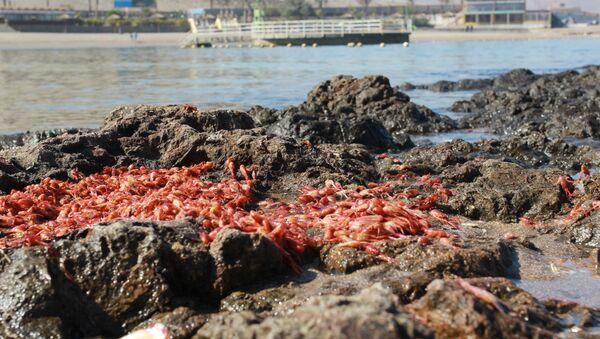 Efecto de marea roja en Chile - Sputnik Mundo