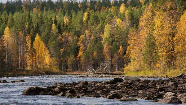 Bosques en Rusia - Sputnik Mundo