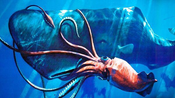 Un cachalote ataca a un calamar gigante - Sputnik Mundo