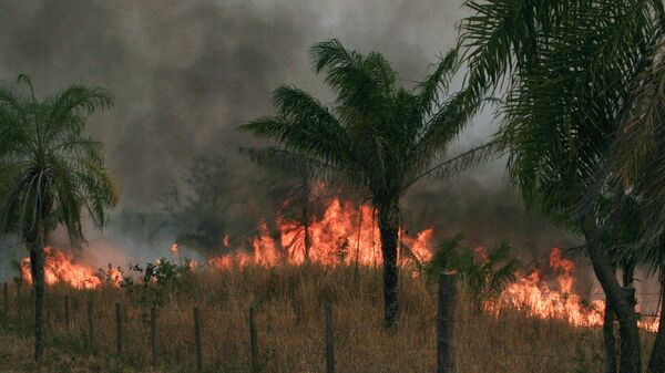 Incendios forestrales en Bolivia (archivo) - Sputnik Mundo