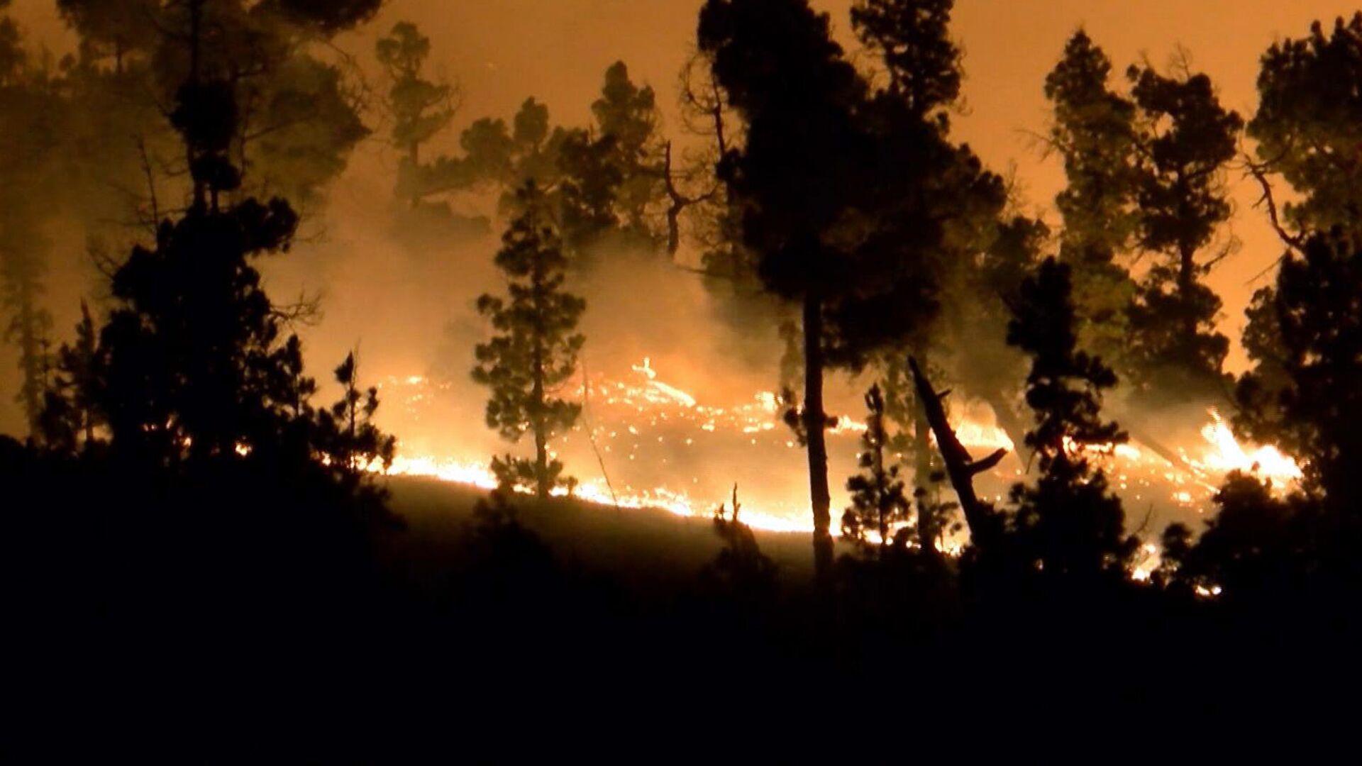 Incendio forestal (imagen referencial) - Sputnik Mundo, 1920, 07.10.2021