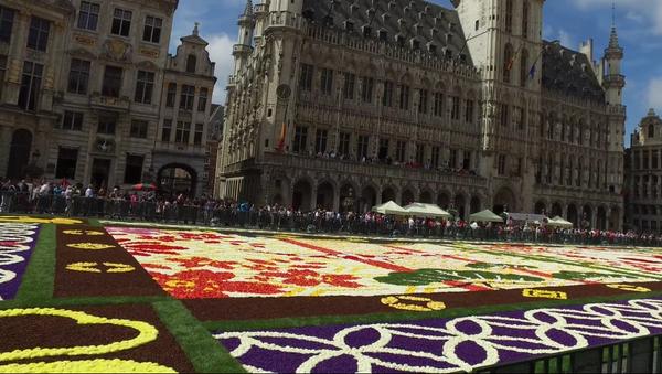 Brussels Flower Carpet 2016 - Sputnik Mundo