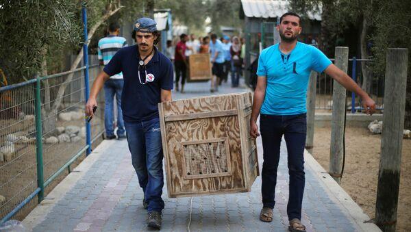 El contenedor con un animal deñ zoo de Gaza - Sputnik Mundo