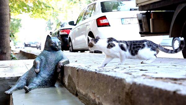 Turquía erige una estatua en honor al gato más vago de las redes sociales - Sputnik Mundo