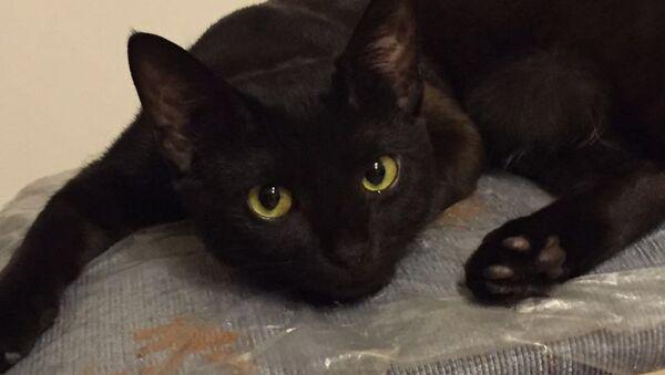 Gato negro piensa cómo destruir una casa - Sputnik Mundo