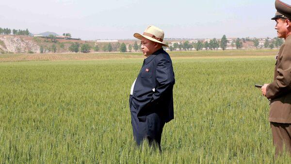 Líder de Corea del Norte, Kim Jong-un, en una granja (archivo) - Sputnik Mundo