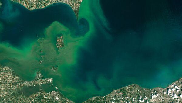 Epidemia de algas venenosas en EEUU - Sputnik Mundo