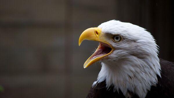 Una águila - Sputnik Mundo