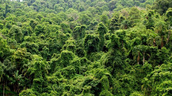 Selva de Brasil (archivo) - Sputnik Mundo