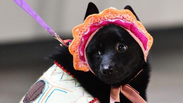 Perro (imagen) - Sputnik Mundo