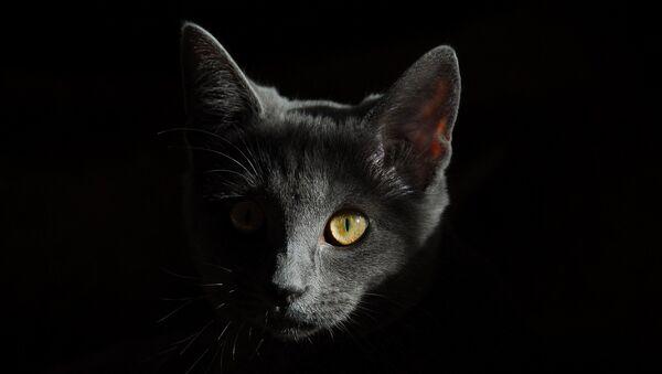 Gato - Sputnik Mundo