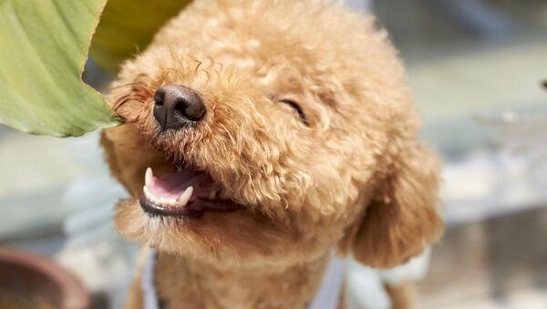 Un perro feliz - Sputnik Mundo