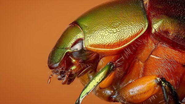 Escarabajo - Sputnik Mundo