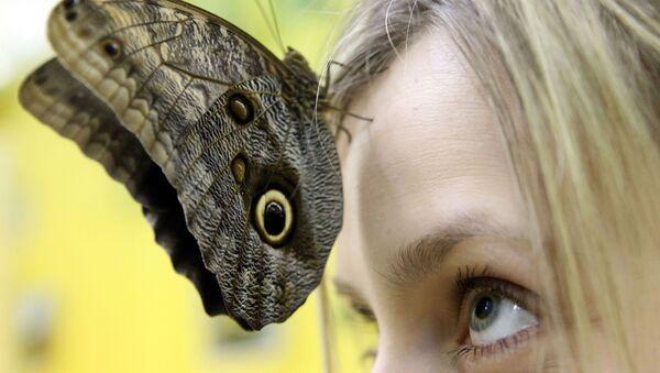 Mariposa viva en el Museo de Kaliningrado - Sputnik Mundo