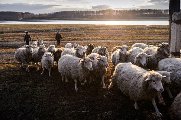 Concurso de fotografía Andréi Stenin: categoría 'Retrato: héroes de nuestro tiempo' - Sputnik Mundo