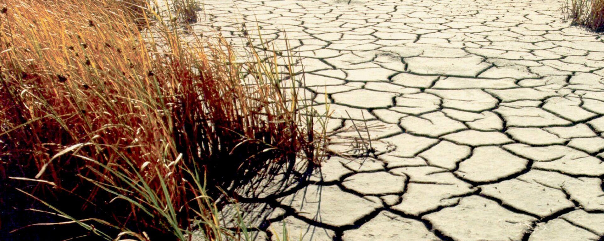 Sequía (imagen referencial) - Sputnik Mundo, 1920, 26.08.2021
