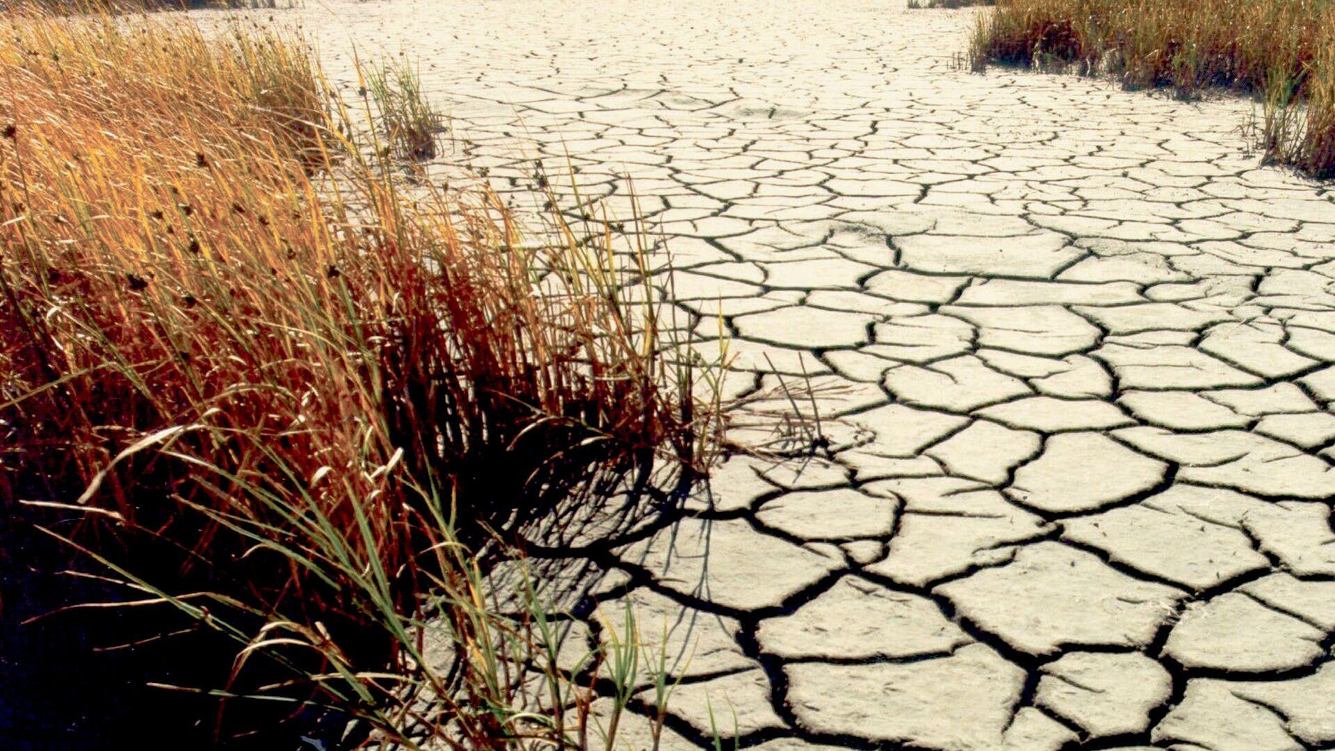 Sequía (imagen referencial) - Sputnik Mundo, 1920, 13.09.2021