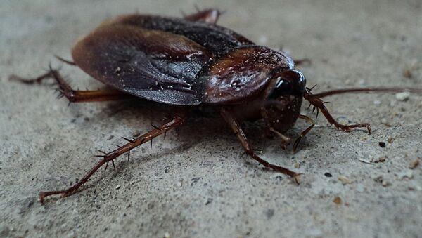 Una cucaracha (imagen referencial) - Sputnik Mundo