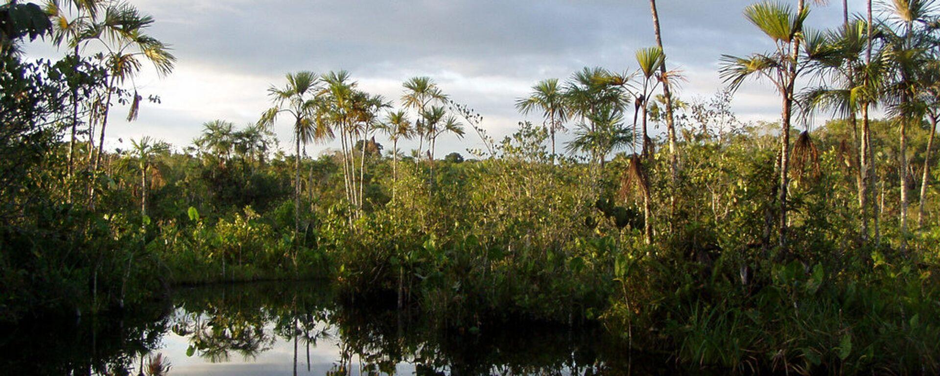 Parque Yasuní, Amazonía - Sputnik Mundo, 1920, 25.12.2020