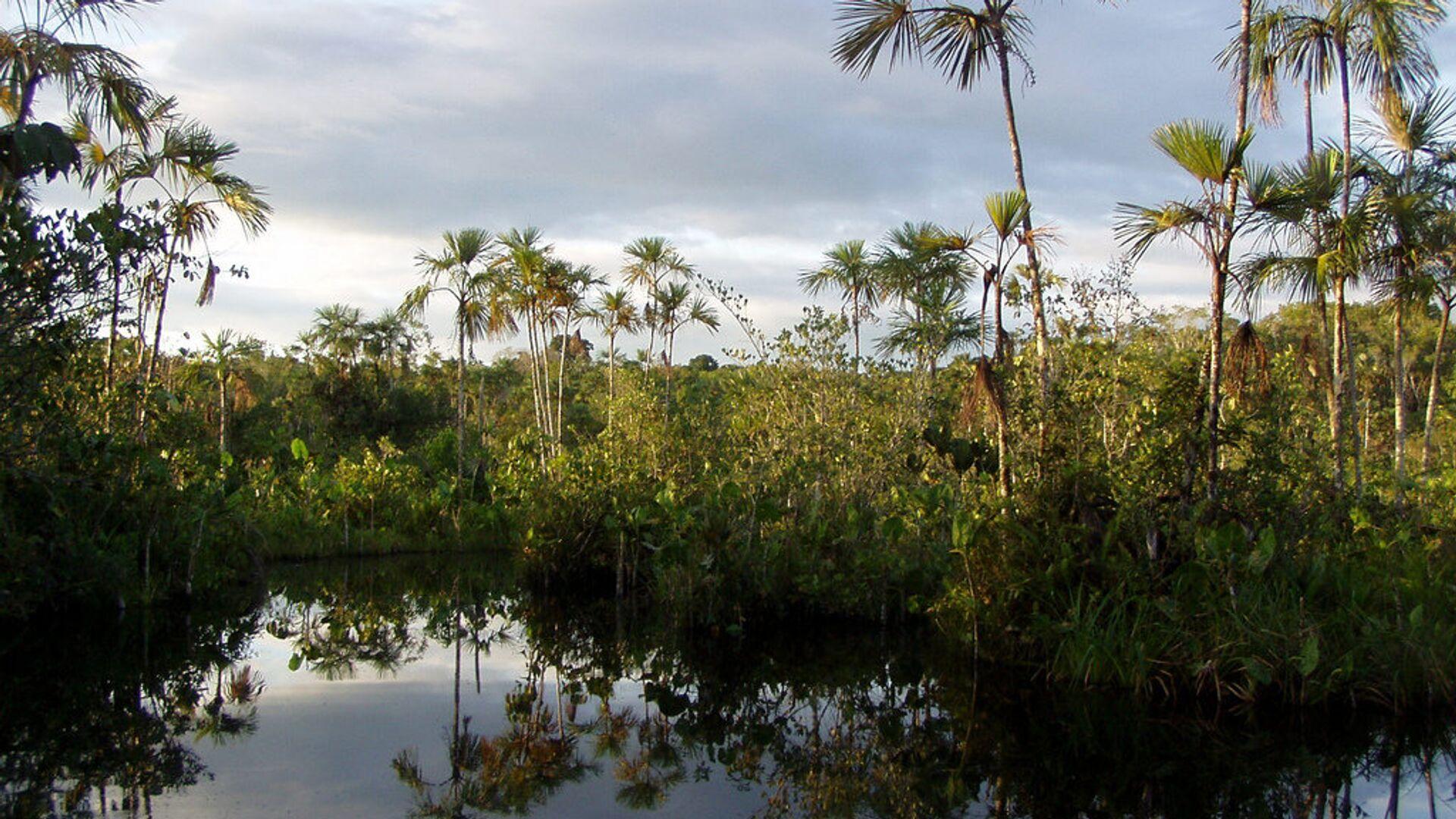 Parque Yasuní, Amazonía - Sputnik Mundo, 1920, 24.09.2021