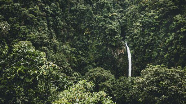 Amazonia (imagen referencial) - Sputnik Mundo