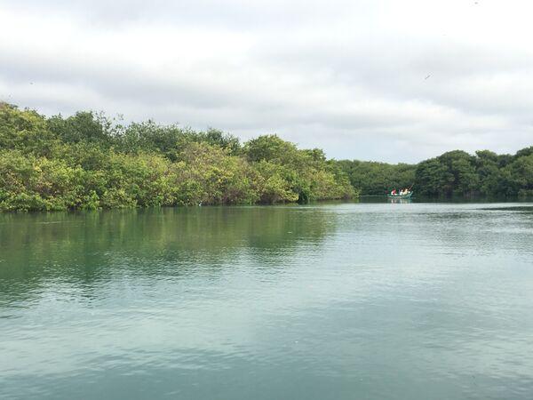 Vista desde la embarcación hacia el manglar La Boca que alberga a cientos de aves, en Manabí. - Sputnik Mundo