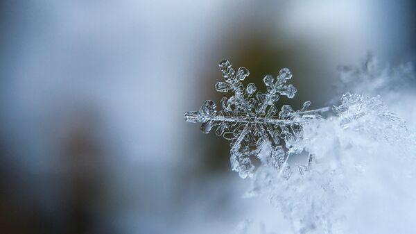 Copos de nieve (imagen referencial) - Sputnik Mundo