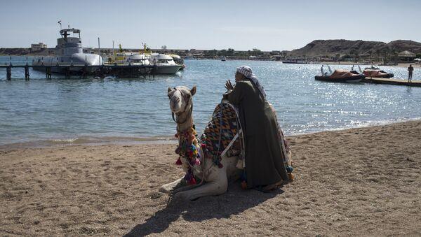 Un camello en la playa de Egipto - Sputnik Mundo