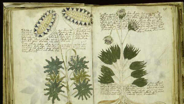 Unas páginas del Manuscrito de Voynich (imagen referencial) - Sputnik Mundo