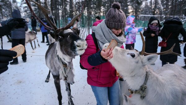 Los saami de Rusia: la vida de un pueblo único a través de las imágenes - Sputnik Mundo