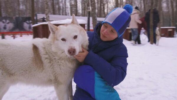 Perros husky ayudan en Moscú a menores con trastornos de desarrollo - Sputnik Mundo