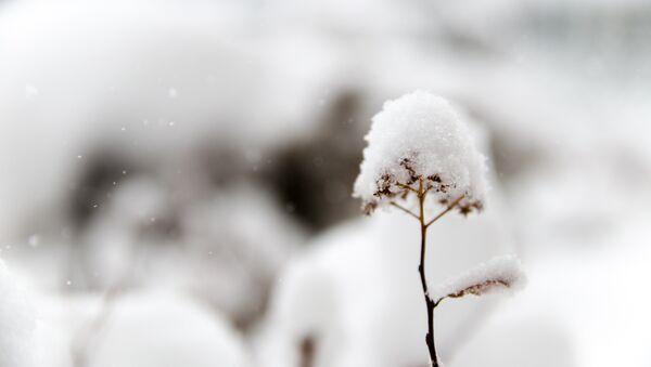 La nieve (imagen referencial) - Sputnik Mundo