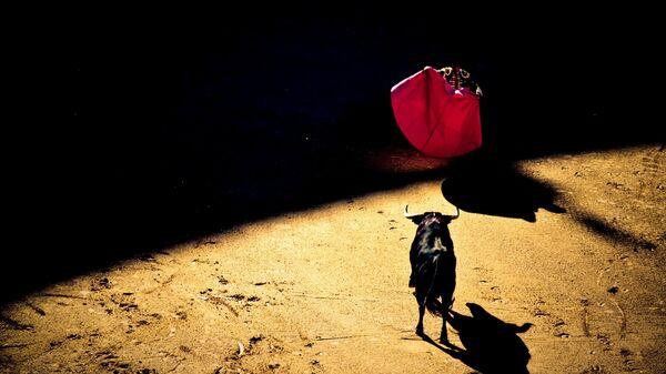 Corrida de toros (imagen referencial) - Sputnik Mundo